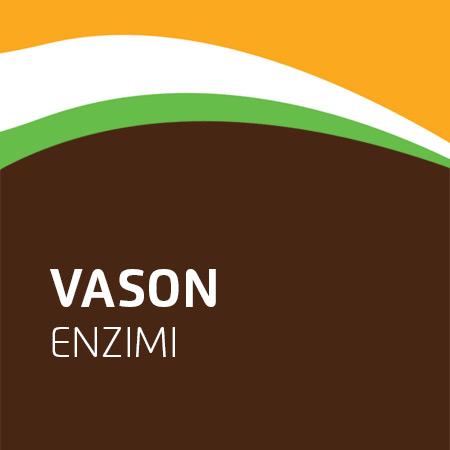 Vason enzimi