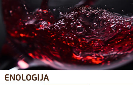 ENOLOGIJA