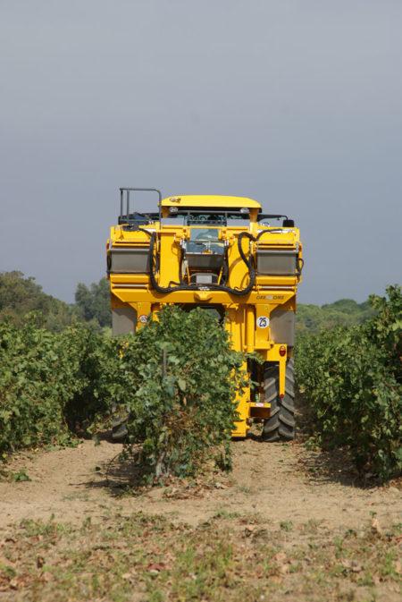 Beračica grožđa Gregoire Kokot Agro